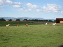 Running through the Pasture