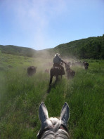 Cattle Herding on Creek Ranch