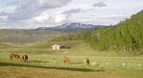 RO Homestead - Property Inspection, Horse Boarding Lease, Fence Mtc, AG Status Preservation